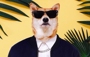 Menswear Dog – hunden som tjänar och klär sig bättre än du