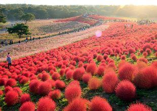 Dagens bild: Japans röda kullar