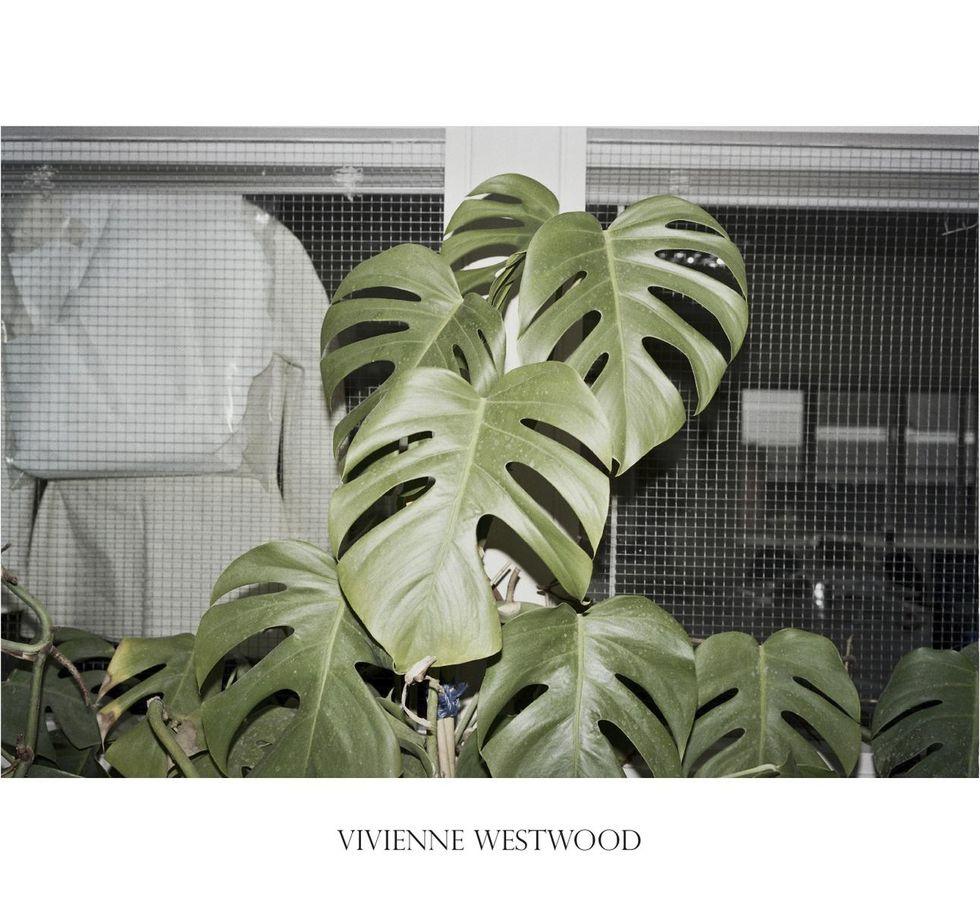 59252-3460569-VIVIENNE_WESTWOOD_pollybrown.jpg